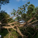 Hurricane Fay Bermuda 2014 (14)