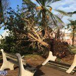 Hurricane Gonzalo 2014 Bermuda (9)