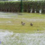 bermuda-rain-flooding-feb-19-2015-49