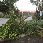 Post-Hurricane-Nicole-Oct-13-2016-241