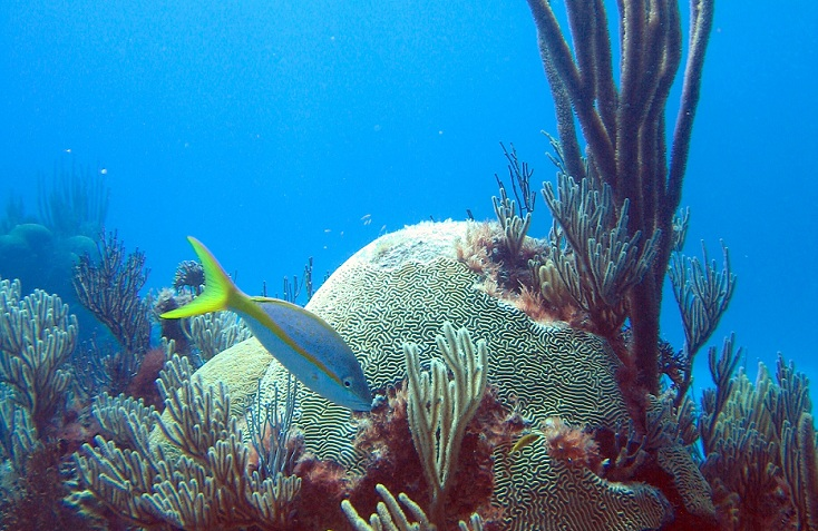 thriving coral reefs could